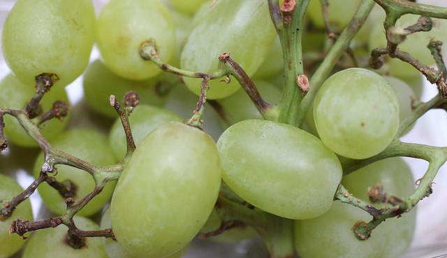 Как ухаживать за сортом винограда  Анзоб
