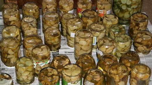 Как солить грибы коровники на зиму