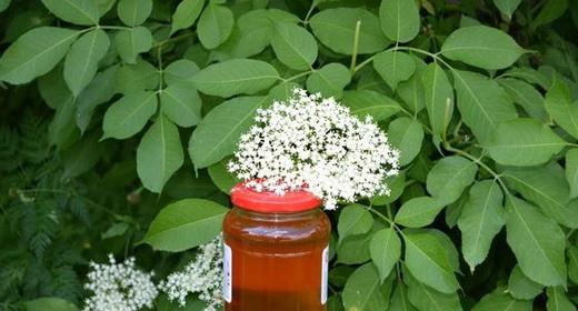 Варенье вкусное из бузины цветков