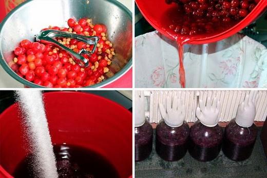 Разнообразие вин из ягод