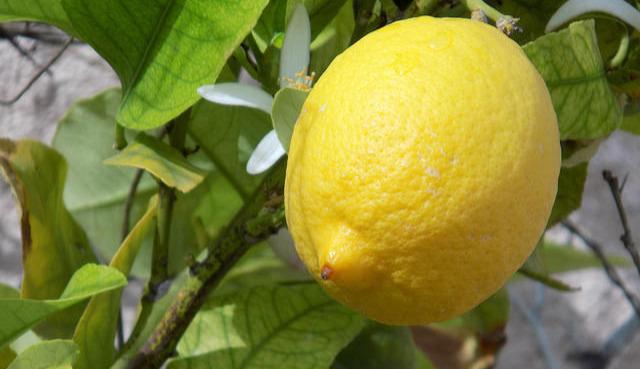 Как использовать масло  лимона