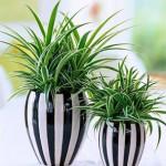 10 комнатных растений, способствующих семейному счастью