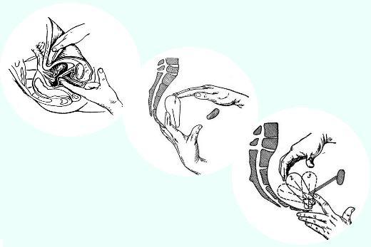 zhenskie-polovie-organi-snaruzhi-i-iznutri-video