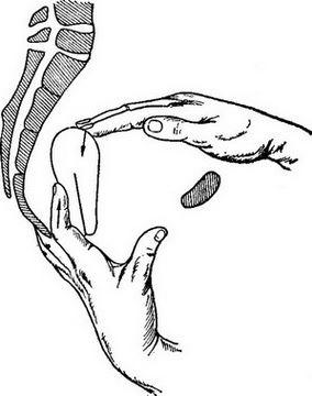 Гинекологический массаж матки: что это такое, как делать в домашних условиях?