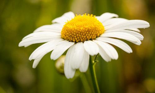 Приснился цветок с корнем
