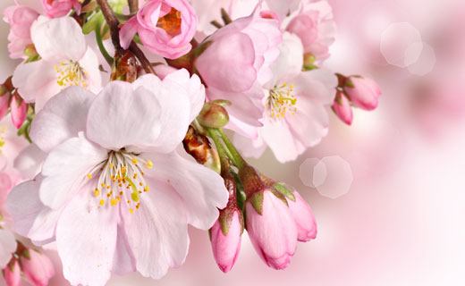 Сонник-засохшие цветы