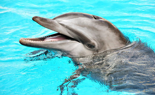 Секс с дельфином руководство