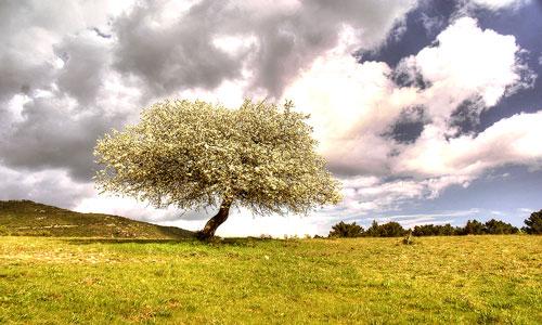 к чему снится сон про дерево