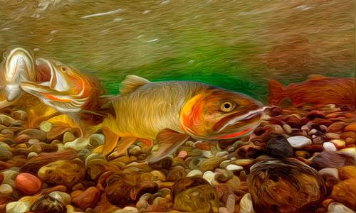 к чему снится рыбу во сне
