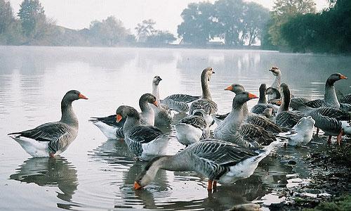 Агрессивные нападающие на сновидца птицы появляются в сновидениях неспроста.