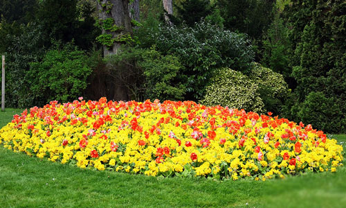 К чему сниться цветы на клумбе