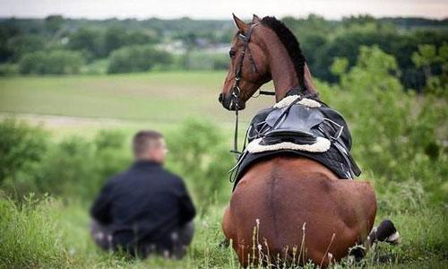 Лошадь снится то означает когда