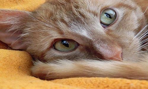 Если приснился грязный кот