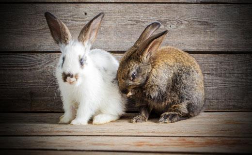 Кролик – символ скорости и быстрого движения, достижения поставленных задач и целей, дружной и крепкой семьи.