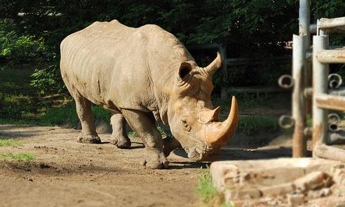 Смотреть бесплатно секс у носорогов онлайн
