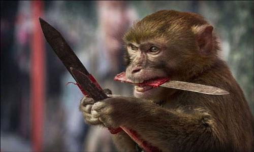 К чему сниться беременная обезьяна